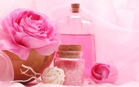 Картинка цветы, масло, розы, flowers, Spa, спа, roses