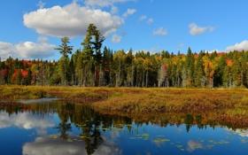 Картинка осень, лес, небо, облака, деревья, пруд, отражение