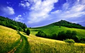 Обои небо, облака, поля