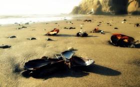 Обои песок, ракушки, пляж, камни, море