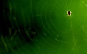 Обои паутина, паук, микро, супер макро