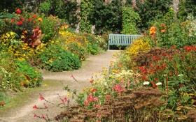 Обои дорожка, трава, солнце, лавочка, кусты, скамейка, сад