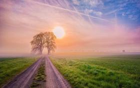 Картинка дорога, солнце, пейзаж, закат, природа, туман, фото