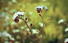 Обои природа, цветы, лепестки, flowers, стебли
