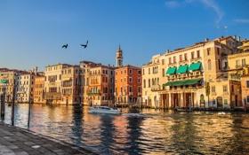 Картинка птицы, дома, катер, Италия, Венеция, канал