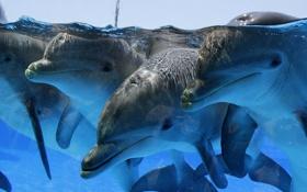 Картинка группа, бассейн, дельфины, стадо, вода, море