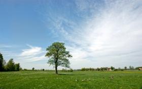 Обои трава, природа, обои, пейзажи, фотографии