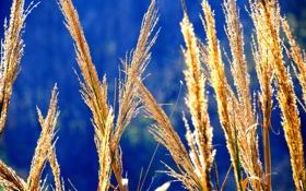 Картинка осень, небо, трава, растение