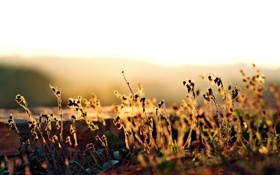 Обои осень, трава, свет