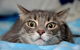 Обои кот, глаза, страх, кошка