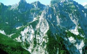 Картинка небо, деревья, горы, вершины