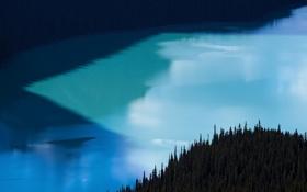 Обои лес, озеро, елки, Alberta, Canada, Peyto Lake