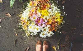 Картинка цветы, ноги, обувь, букет, лепестки, балетки