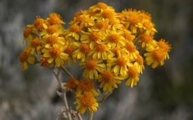 Картинка осень, природа, растение, ветка, лепестки
