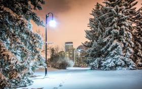 Обои ночь, город, парк, Calgary