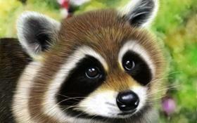 Картинка глаза, взгляд, животное, мордочка, енот, ушки