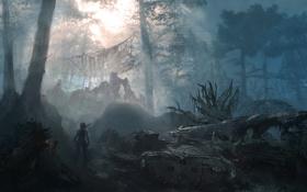 Картинка лес, девушка, деревья, самолет, Tomb Raider, Расхитительница гробниц