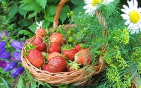 Картинка цветы, ягоды, ромашки, клубника, корзинка