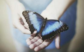 Обои бабочка, ситуация, руки