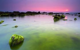 Обои камни, зеленые, океан, вода, утро, море