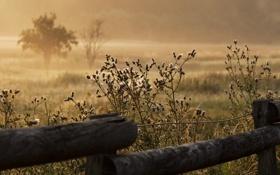 Картинка трава, туман, забор