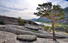 Картинка пейзаж, горы, дерево