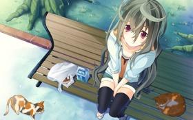 Картинка скамейка, девочка, кисы