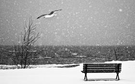 Обои море, снег, чайка, лавка