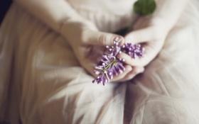 Обои цветы, руки, сирень