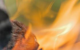 Картинка макро, огонь, пламя, кастер, уголек