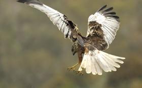 Картинка птица, крылья, перья, клюв, хвост