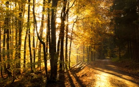 Обои дорога, осень, лес, forest