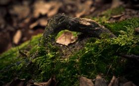 Обои лес, макро, корни, дерево, мох, древесина