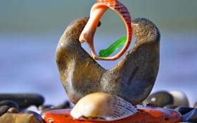 Обои природа, камни, конструкция, сооружение, ракушки, морской мир