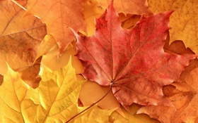 Картинка осень, листья, оранж