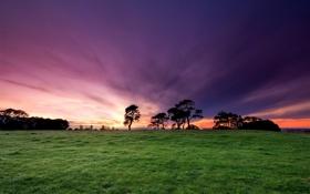 Картинка небо, трава, цвета, деревья, закат, природа, фото