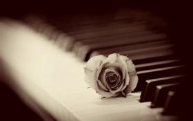 Обои фон, роза, пианино