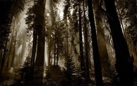 Картинка лес, деревья, чаща, красный лес