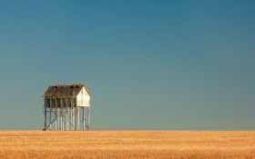 Обои пшеница, небо, дерево, горизонт, sky, wood, ферма