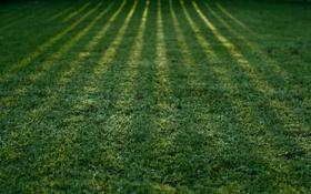 Обои green wallpapers, трава, тень, зелёный, тени, природа, фоновые обои