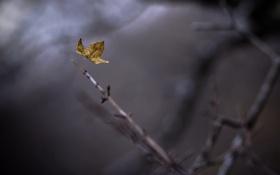 Обои осень, макро, лист