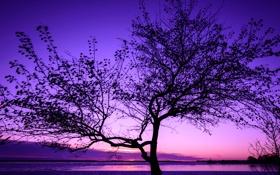 Обои небо, облака, озеро, дерево, вечер, зарево