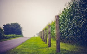 Картинка дорога, лето, забор