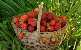 Обои клубника, корзина, ягоды