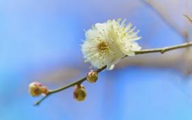 Картинка цветок, дерево, весна, лепестки, сад