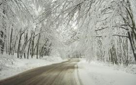 Обои зима, дорога, снег, деревья