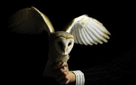 Картинка рука, птица. сова, манжета