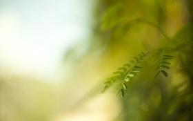 Обои листья, макро, природа