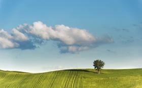 Обои весна, небо, облака, ковры, поля, дерево