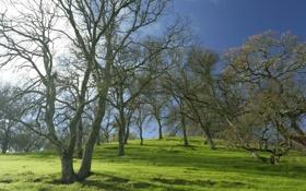 Обои небо, трава, деревья, природа, весна, дубы